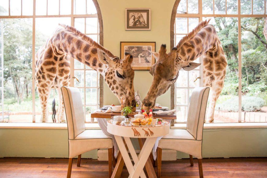 The Safari Collection Group